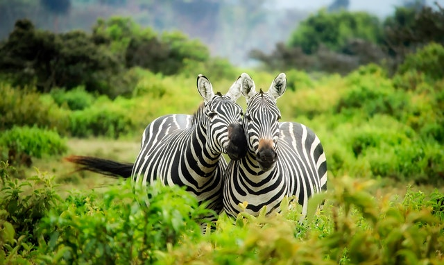 10 Tips For Taking Children On A Safari Trip